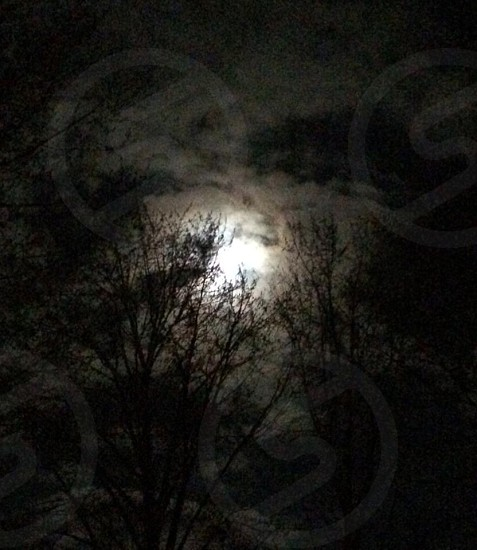 Full moon through the trees.  photo