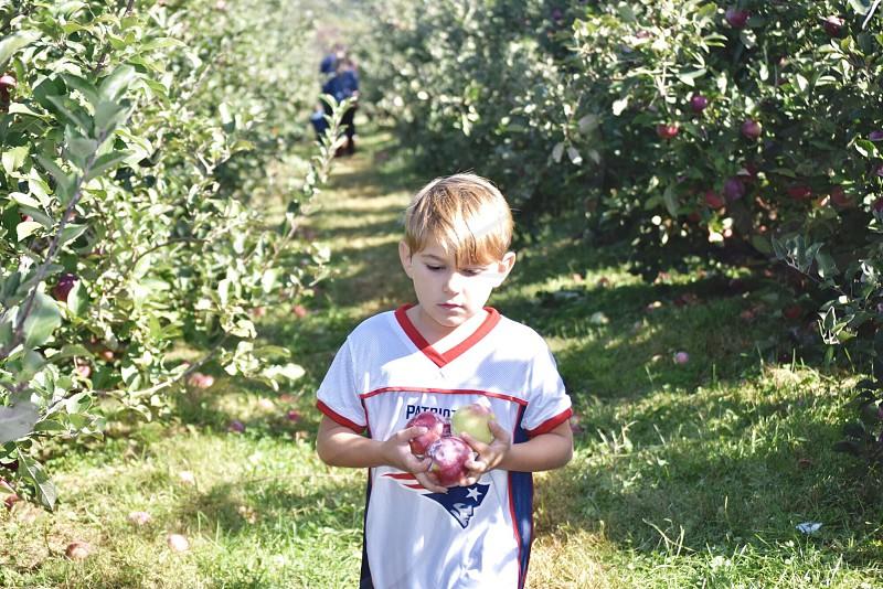 Family fun outdoor activities lifestyle apple picking  photo