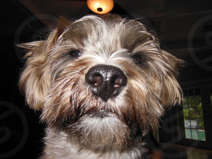 Horton the dog photo