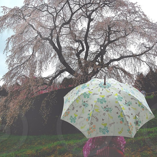 person holding a white and green  flower printed umbrella photo