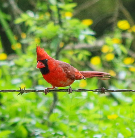 bird on a wire photo