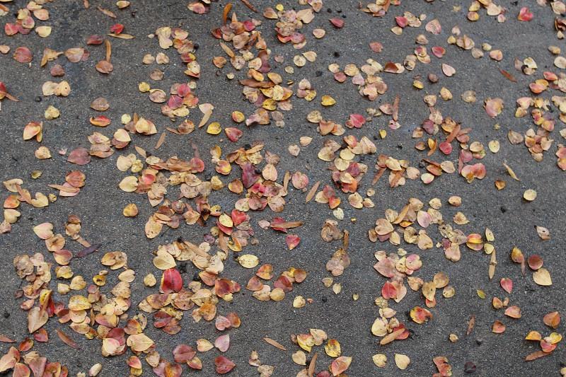 Wet autumn leaves on asphalt photo