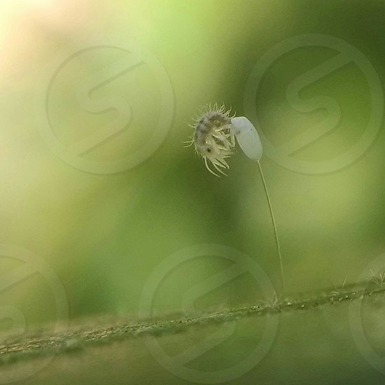 Small bug laying eggs green insect macro photo