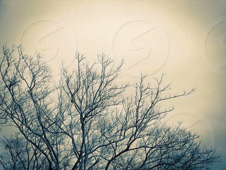 tree branch fall falls autumn leafless season dry sky cloud blue background dead death sad sorrow solitude calm silence lifeless still empty end fallen  hopeless desperate nature weather withering photo