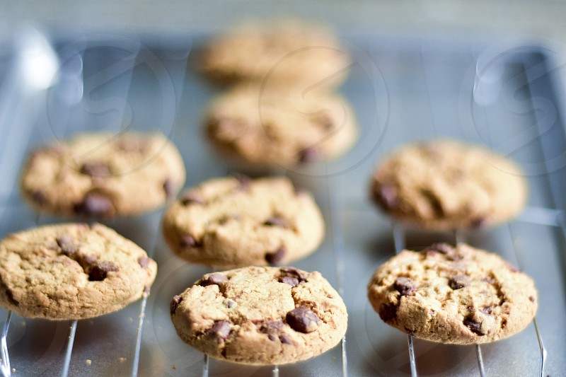 Chocolate chip cookie  photo