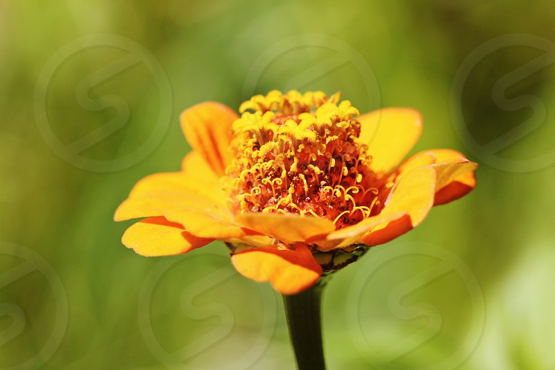 Pretty vibrant orange flower photo