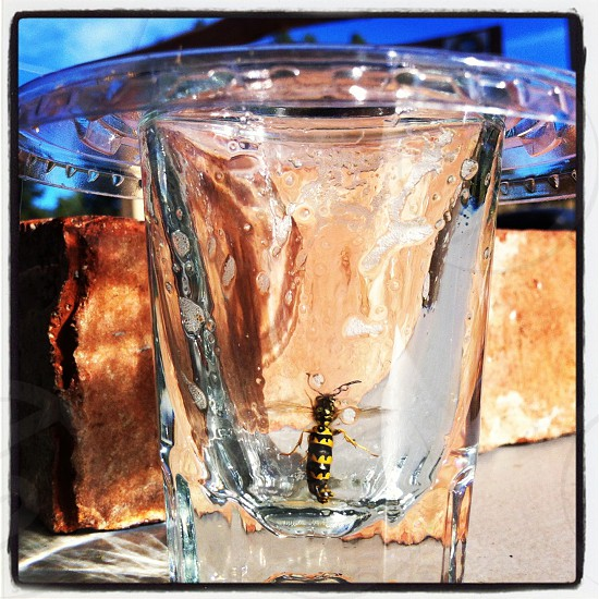 Wasp in a glass photo