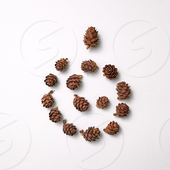 Composition of pine cones in the form of a spiral on a gray background with space for text. Natural layout. Flat lay photo