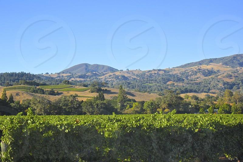 Sbragia Winery Dry Creek Valley Sonoma County California photo