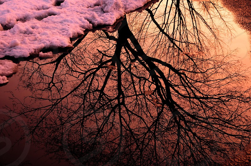 reflection of tree branches on body of water photo