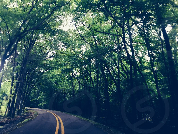 Louisiana curves lines trees country peaceful tranquil photo