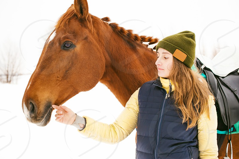 Female rider and horse in the open air. portrait of a beautiful young woman with her stallion outdoors in winter. photo