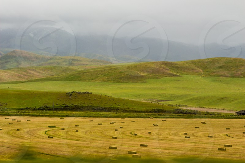 Idaho plains hay hay balesgrassland farmland photo