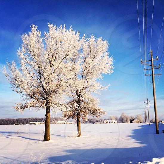 Snow trees country photo