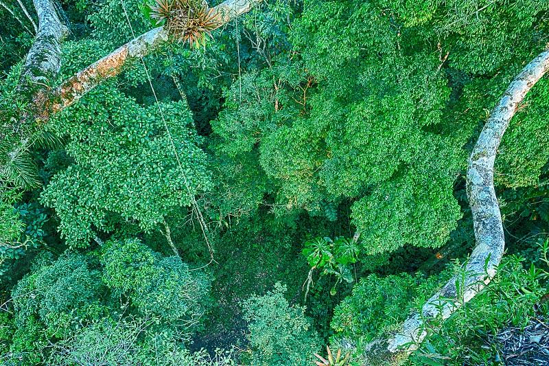 Amazon Rainforest Canopy View photo