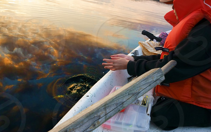 Young boy releases small perch fish back to the lake on summer evening in Finland photo