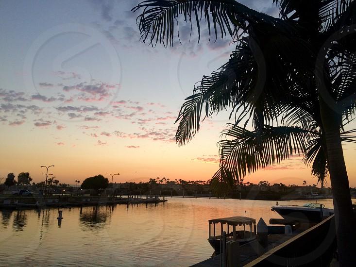 Marina Sunset Long Beach California palm trees photo