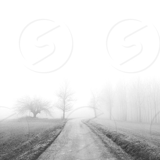 fog fields photo