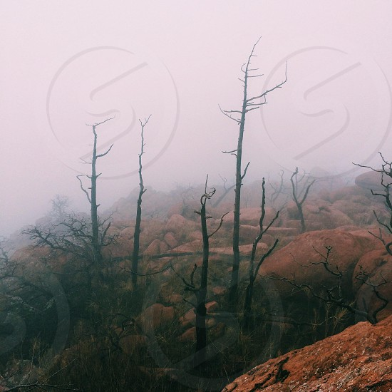 brown mountains and leafless trees photograph photo