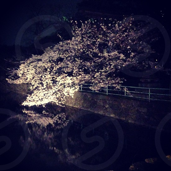 Night spring Japan travel water  photo