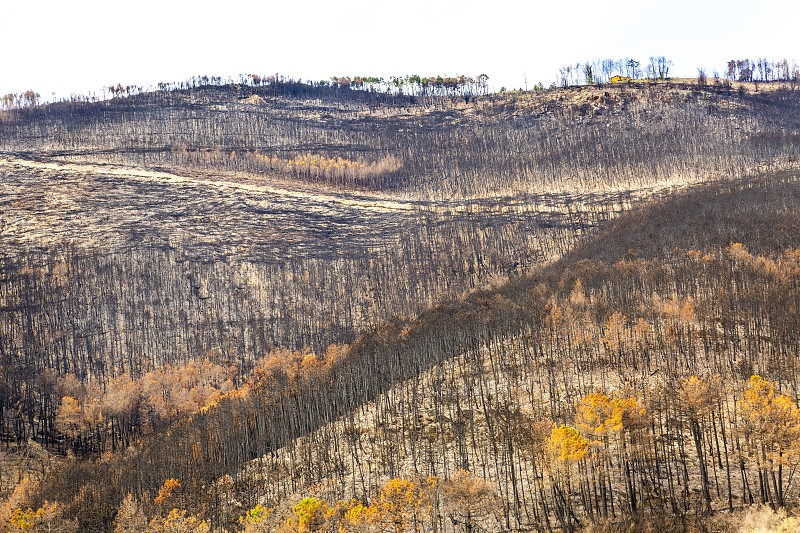 The Monte Serra in Tuscany devastated by a great fire caused by man  photo