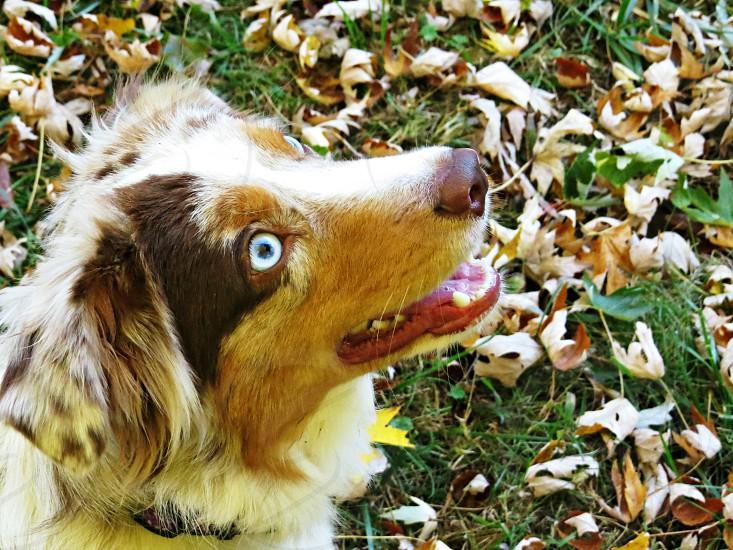 Dog gazes up waiting for owner photo