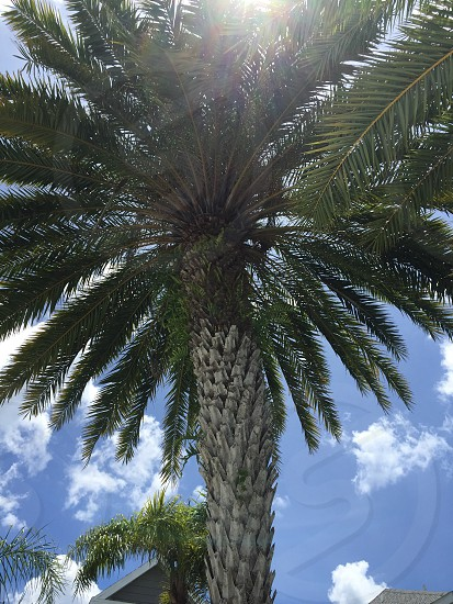 Palm tree photo