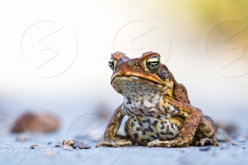 A Toads eye view an ugly frog ground level grumpy frog kiss me a prince in waiting photo