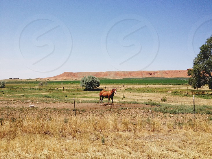 brown horse at open field photo