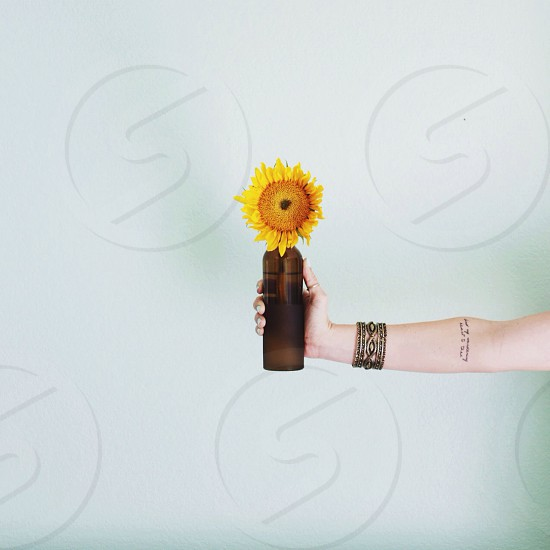 person holding a sunflower photo