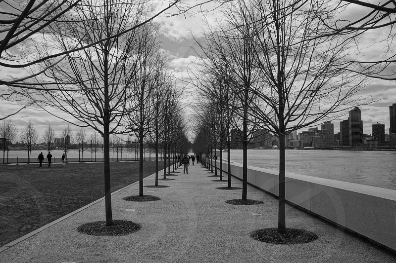 grayscale photo of people waking on pathway with leafless trees lined up on side photo