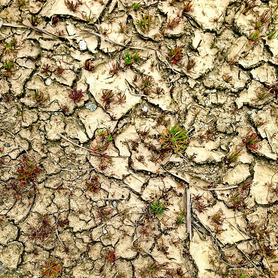 brown cracked soil photo