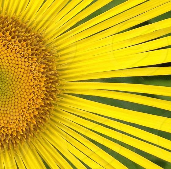 Sunny Daymacroclose uppollenflowerpetalsYellowNatureNatural photo
