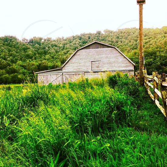 Green green grass and barn. photo