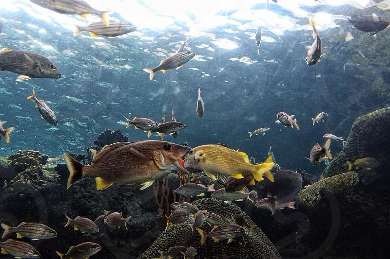 yellow fin fish photo