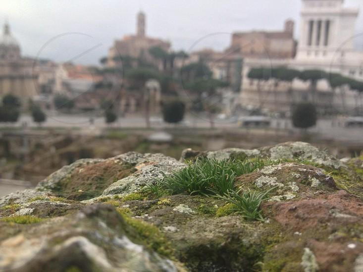 Rome. Rock. Little plant.  photo
