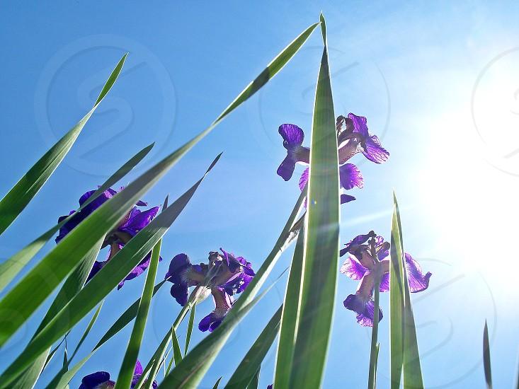backyard flowers photo