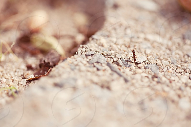 veiw of light brown dirt photo