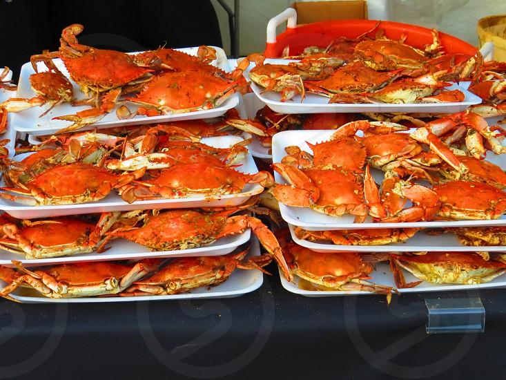 Platters of Maryland Blue Crabs.  Food festival ocean crustacean photo