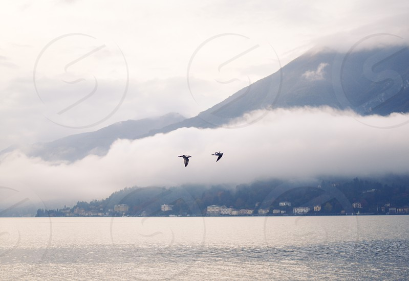 lake como birds fly flock seagulls lake fog photo