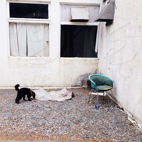 black dog on the ground photo
