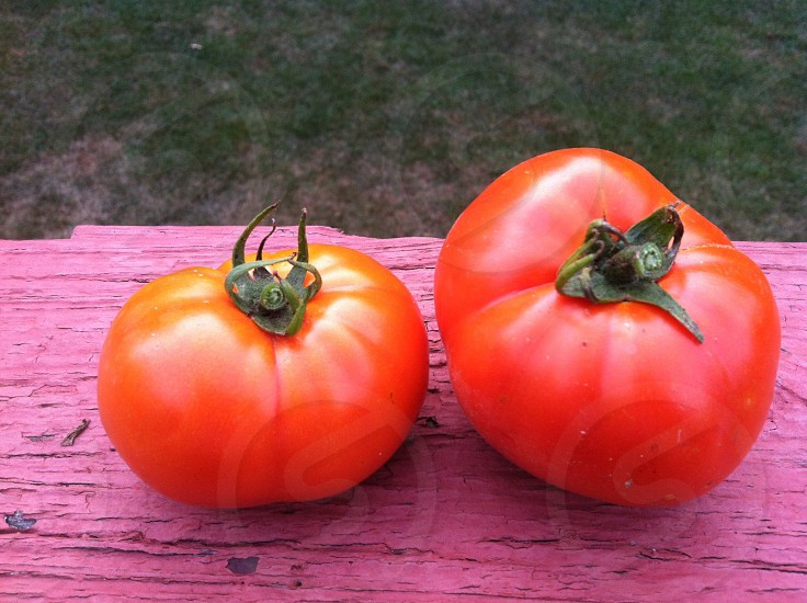 two red cherry tomatoes photo