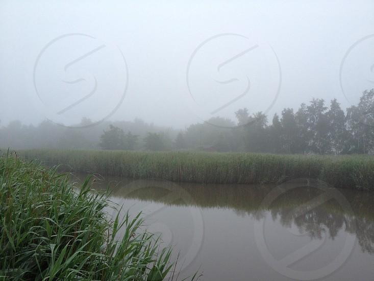 green grass near river photo