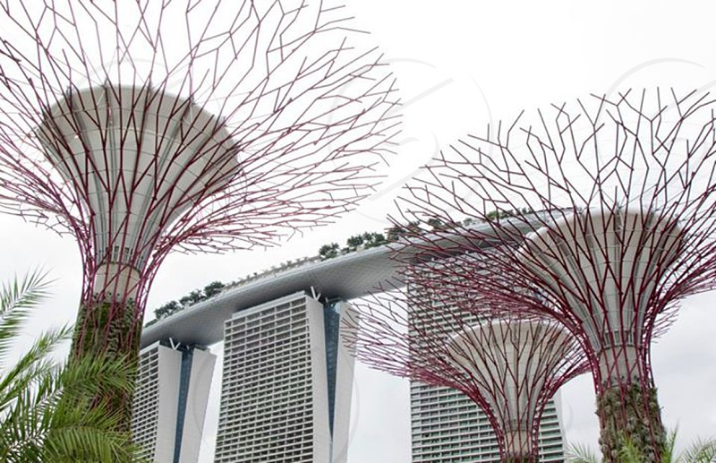 Marina Bay Sands and Solar Powered Trees photo