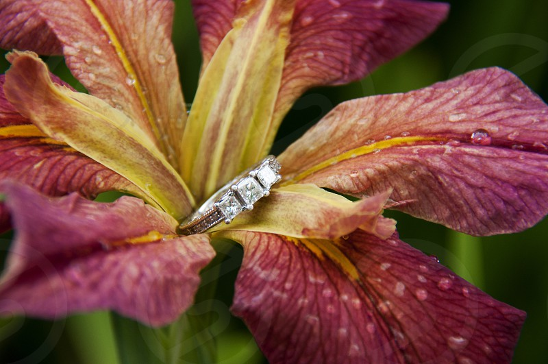 Engagement ring on a wet flower photo
