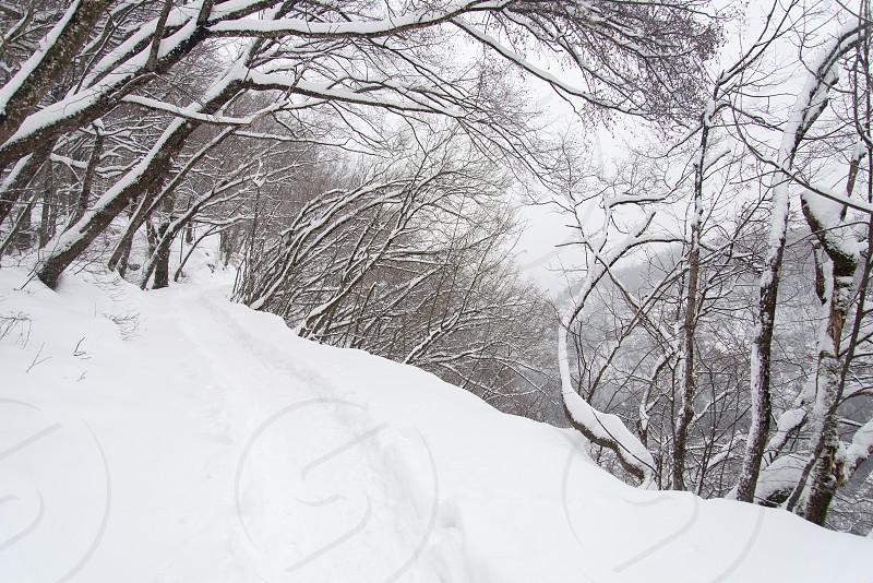 Croatia winter Plitvice Lakes National Park  photo