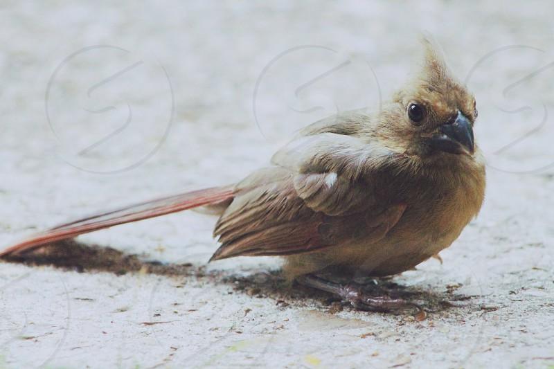 Muted Tones bird photo