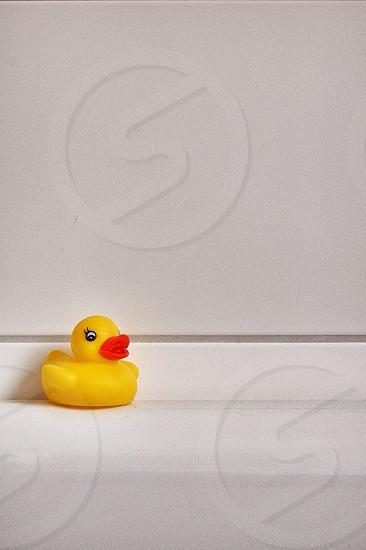 yellow rubber duck photo