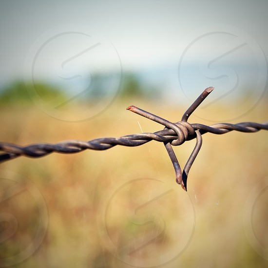 Barbed wire against nature background photo