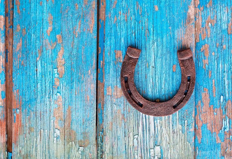 Lucky horse cute love happy joy morning  photo